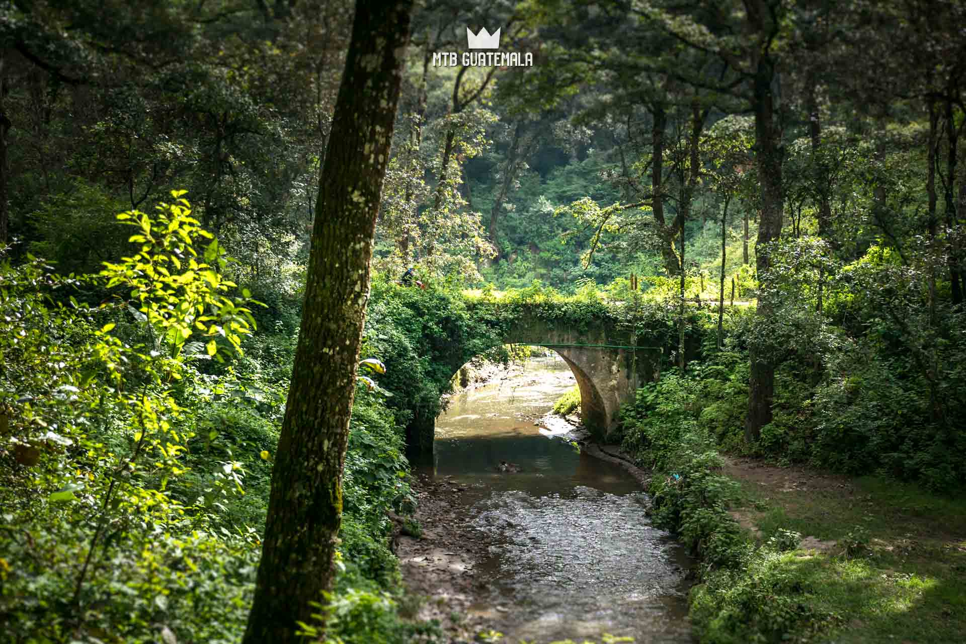 Forest bridges