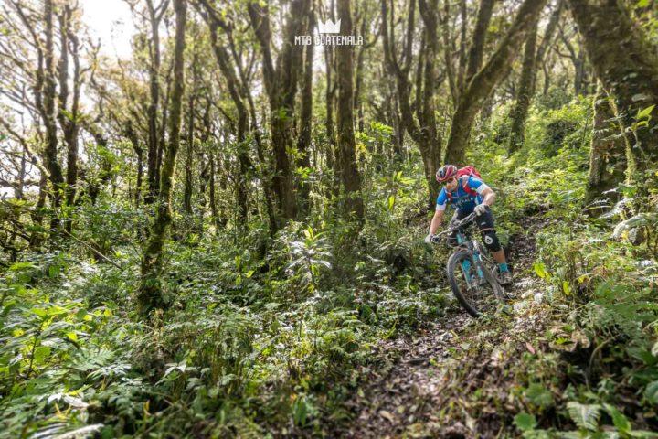 Unique forest at altitude.  Valle Escondido Adventure Mountain Bike Tour  Chimaltenango, Guatemala