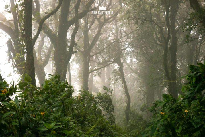 Rich cloudforest near 9,000ft. Valle Escondido Adventure MTB Tour.  Chimaltenango, Guatemala