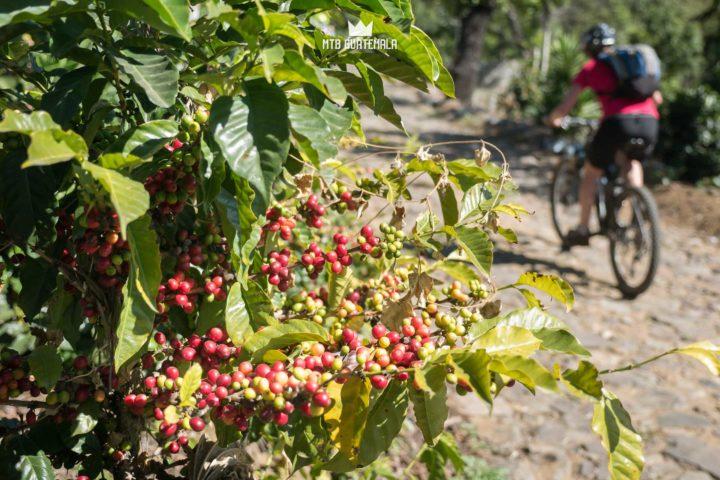 Antigua Coffee Bike Tour Antigua Sacatepéquez, Guatemala
